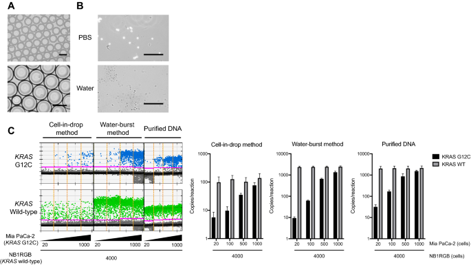 Time-saving method for directly amplifying and capturing a minimal amount of pancreatic tumor-derived mutations from fine-needle aspirates using digital PCR