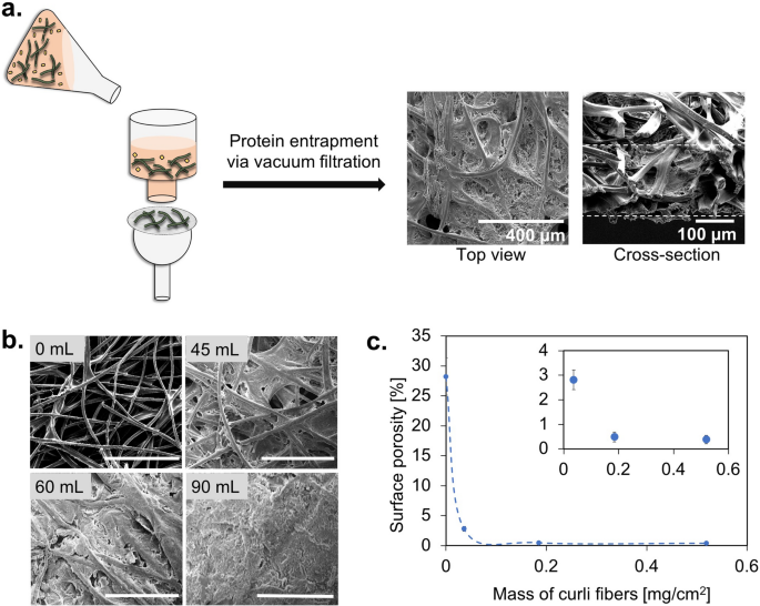 Fabrication of fluorescent pH-responsive protein–textile composites
