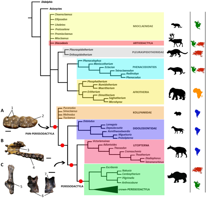 Phylogenetic tree of Litopterna and Perissodactyla indicates a complex  early history of hoofed mammals | Scientific Reports