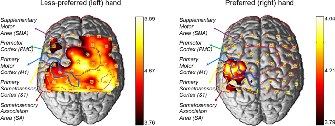 Hemispheric asymmetry in hand preference of right-handers for passive vibrotactile perception: an fNIRS study