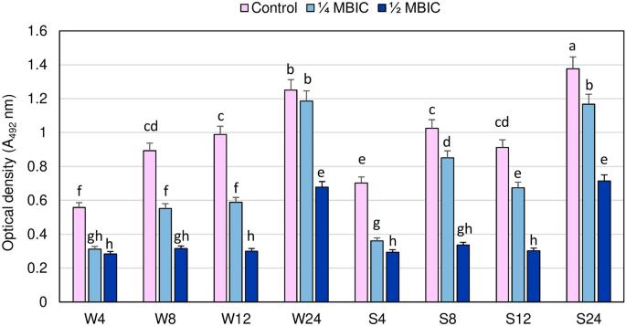 Effect of manuka honey on biofilm-associated genes expression during methicillin-resistant Staphylococcus aureus biofilm formation