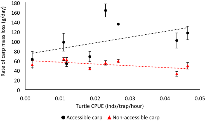 Scavenging by threatened turtles regulates freshwater ecosystem health during fish kills