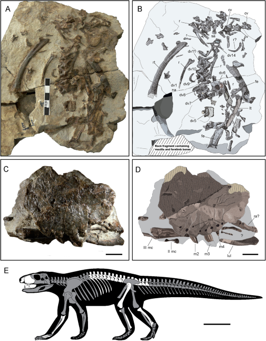 A small Cretaceous crocodyliform in a dinosaur nesting ground and the origin of sebecids