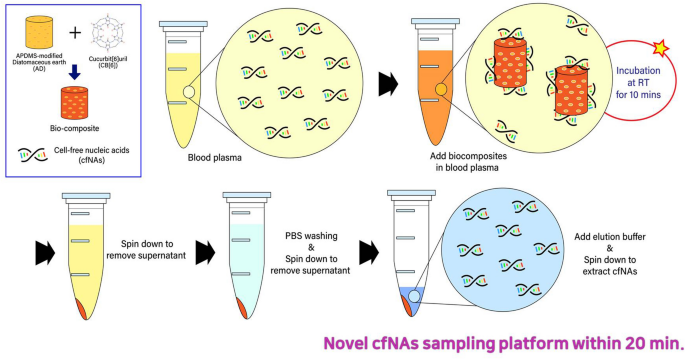 A Biocomposite Based Rapid Sampling Assay For Circulating Cell Free Dna In Liquid Biopsy Samples From Human Cancers Scientific Reports