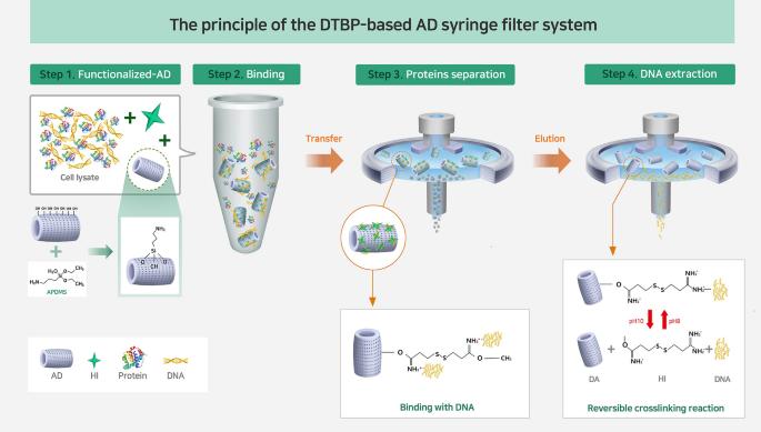 Dimethyl 3 3 Dithiobispropionimidate Functionalized Diatomaceous Earth Particles For Efficient Biomolecule Separation Scientific Reports