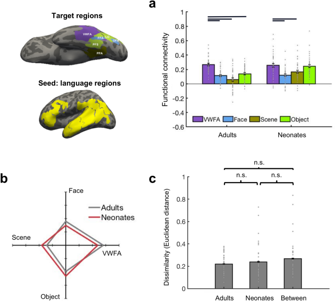 Innate connectivity patterns drive the development of the visual word form area