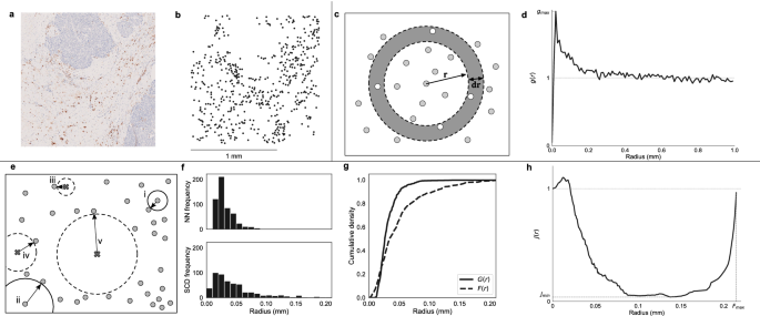 Combining multiple spatial statistics enhances the description of immune cell localisation within tumours
