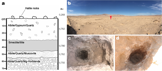 Inhabited subsurface wet smectites in the hyperarid core of the Atacama Desert as an analog for the search for life on Mars