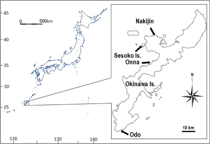 Snails associated with the coral-killing sponge Terpios hoshinota in Okinawa Island, Japan