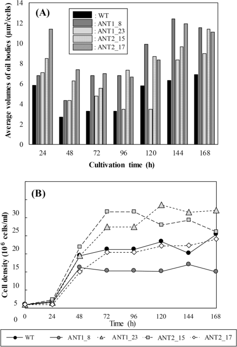 Assessment on the oil accumulation by knockdown of triacylglycerol lipase in the oleaginous diatom Fistulifera solaris - Scientific Reports