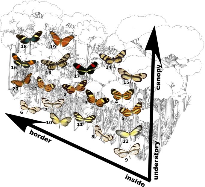 Habitat generalist species constrain the diversity of mimicry rings in heterogeneous habitats