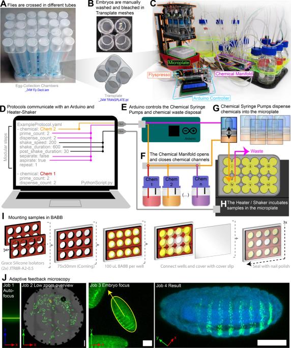 An open-source semi-automated robotics pipeline for embryo immunohistochemistry