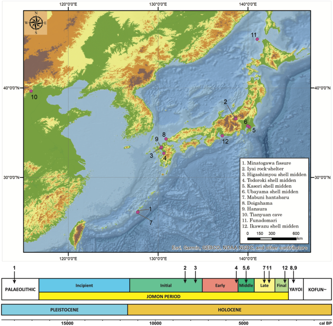 Population dynamics in the Japanese Archipelago since the Pleistocene revealed by the complete mitochondrial genome sequences