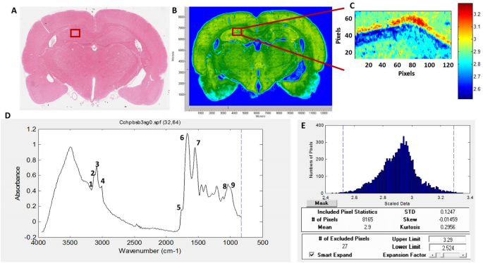 Biomolecular changes and subsequent time-dependent recovery in hippocampal tissue after experimental mild traumatic brain injury
