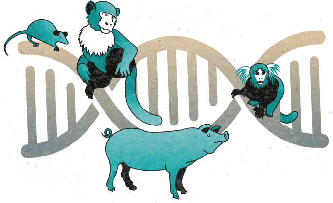 Animals from mouse to macaque feature in the NIH Somatic Cell Genome Editing Program