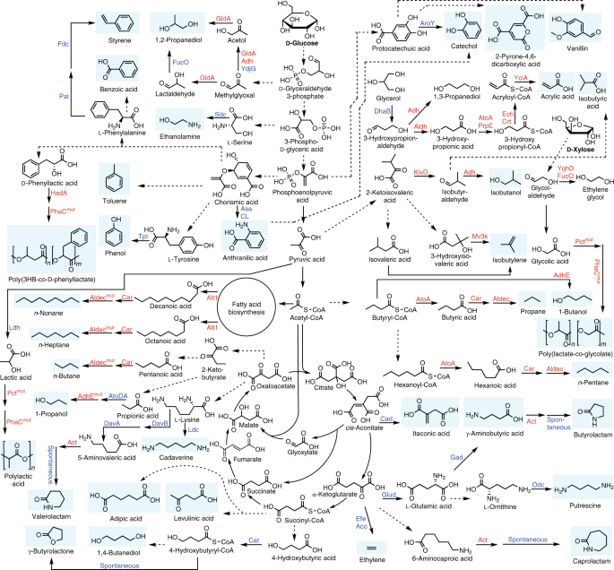 A comprehensive metabolic map for production of bio-based ... on science map, emotional map, research map, cement map, organic map, tobacco map, metal map, chemistry mind map, chemistry concept map, biological map, marine map, electricity map, government map, sound map, magnetic map, biology map, media map,
