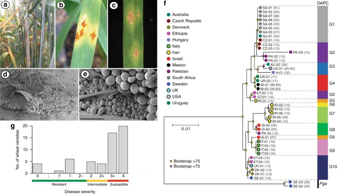 Potential for re-emergence of wheat stem rust in the United Kingdom