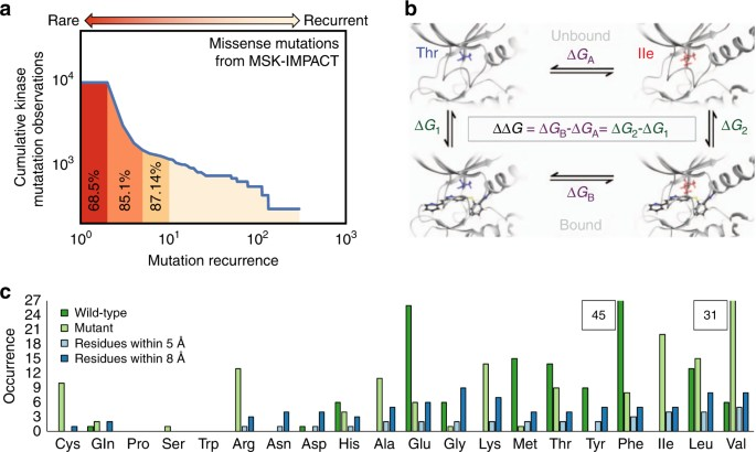 Predicting resistance of clinical Abl mutations to targeted kinase