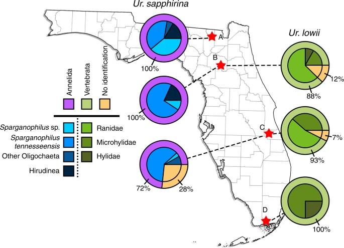 Identification of Uranotaenia sapphirina as a specialist of annelids