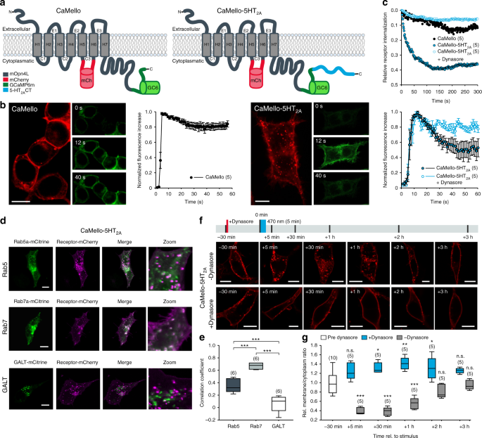 CaMello-XR enables visualization and optogenetic control of G q/11