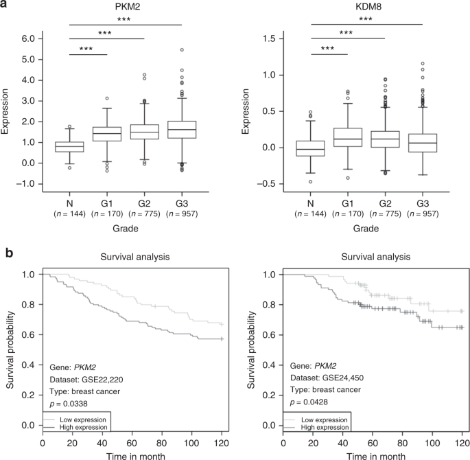 Mutations in the PKM2 exon-10 region are associated with reduced ...