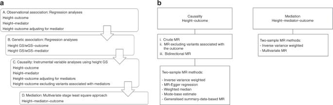 Mendelian randomisation analyses find pulmonary factors mediate the