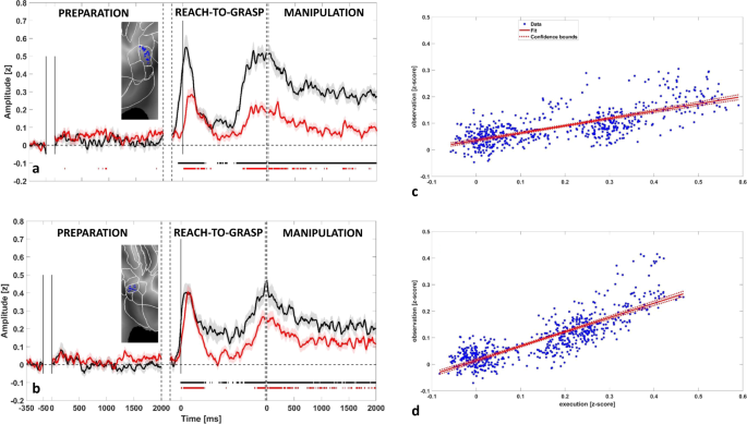 Action execution and action observation elicit mirror responses with the same temporal profile in human SII