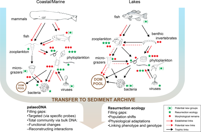 Dead or alive: sediment DNA archives as tools for tracking aquatic evolution and adaptation