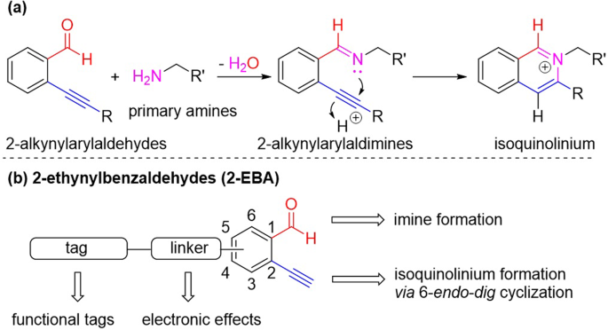 N-Terminal selective modification of peptides and proteins using 2-ethynylbenzaldehydes