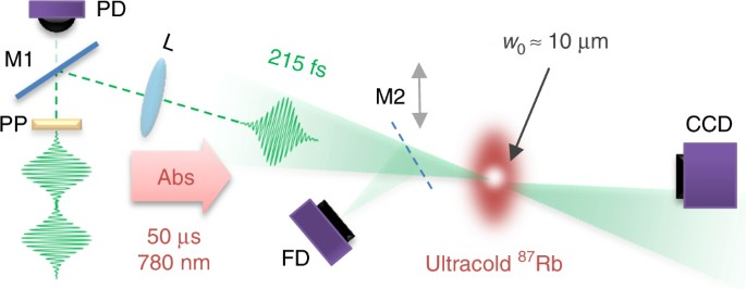 Absolute strong-field ionization probabilities of ultracold