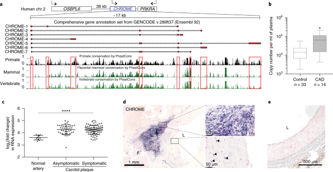 The long noncoding RNA CHROME regulates cholesterol