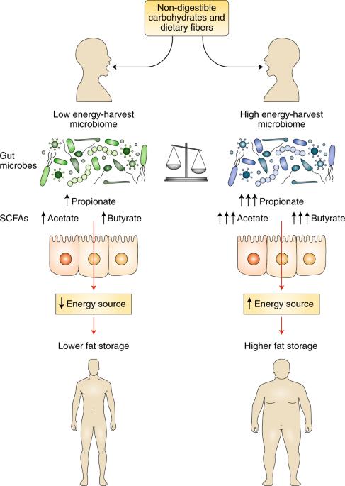 Microbial regulation of organismal energy homeostasis
