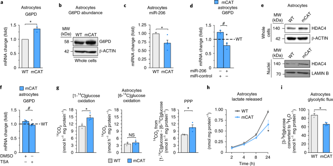 Astrocytic mitochondrial ROS modulate brain metabolism and