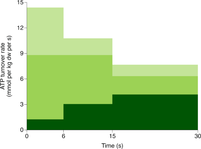 longterm ketogenic diet increases creatineohosphate cycle