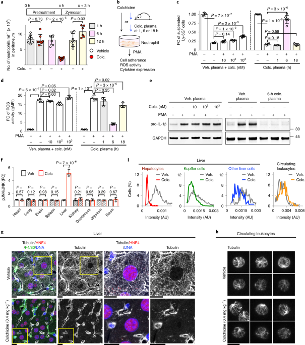 Colchicine acts selectively in the liver to induce hepatokines that inhibit myeloid cell activation