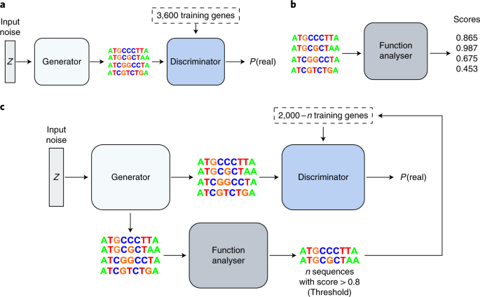 Feedback GAN for DNA optimizes protein functions | Nature