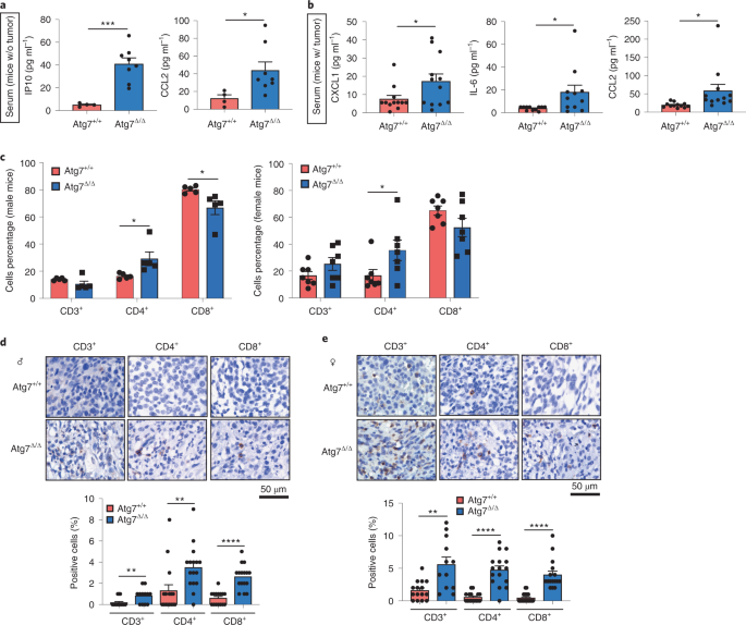 Autophagy promotes growth of tumors with high mutational burden by inhibiting a T-cell immune response