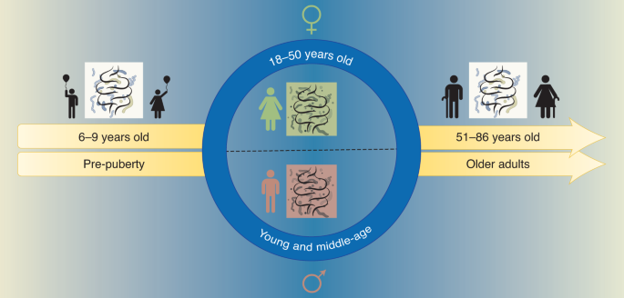 Lifelong sex-dependent trajectories of the human gut microbiota