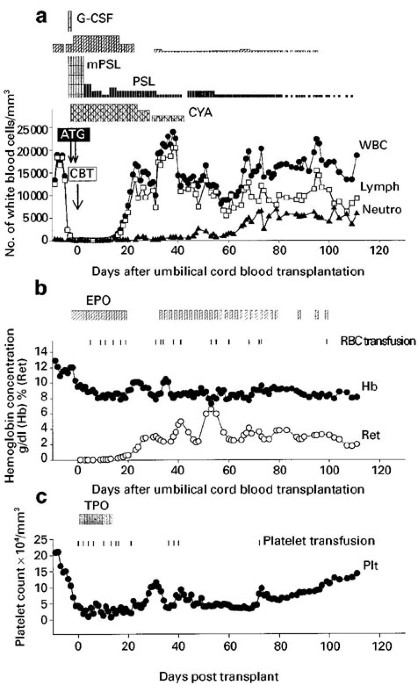 Transient hematopoietic stem cell rescue using umbilical cord blood