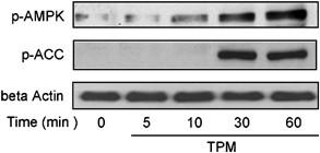 Topiramate stimulates glucose transport through AMP