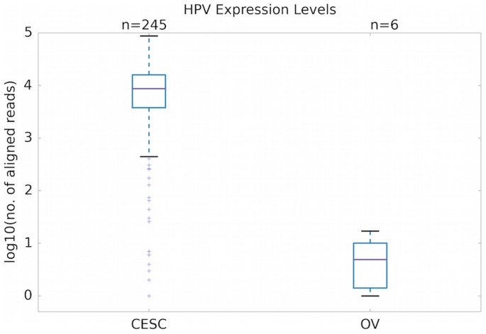 High risk hpv and ovarian cancer, Hpv causes ovarian cancer