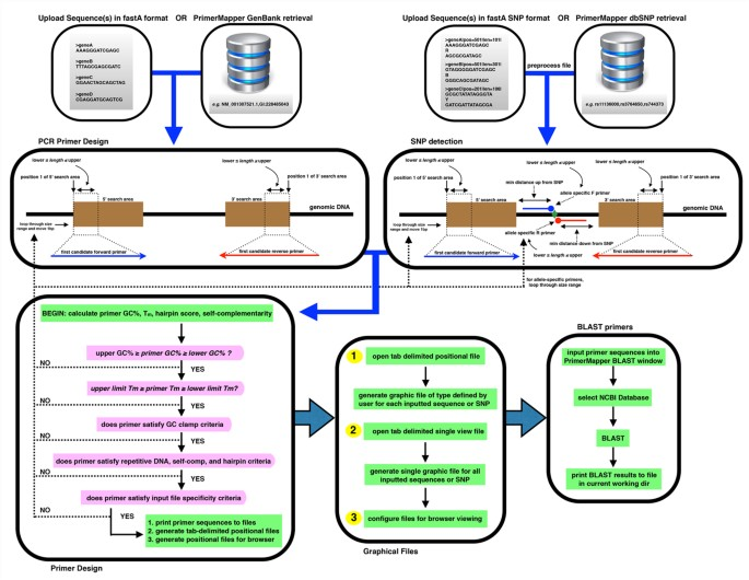 Primermapper High Throughput Primer Design And Graphical Assembly For Pcr And Snp Detection Scientific Reports
