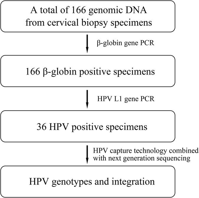 Papillomavirus dna hpv 16 poate fi vindecat