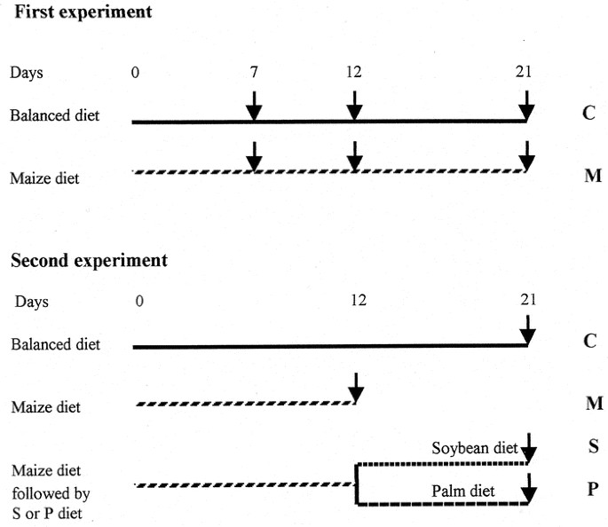 Palm Versus Soybean Oil on Intestinal Recovery from