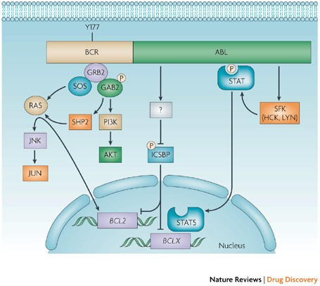 The coupleable analogues of the BCR-ABL inhibitors retain