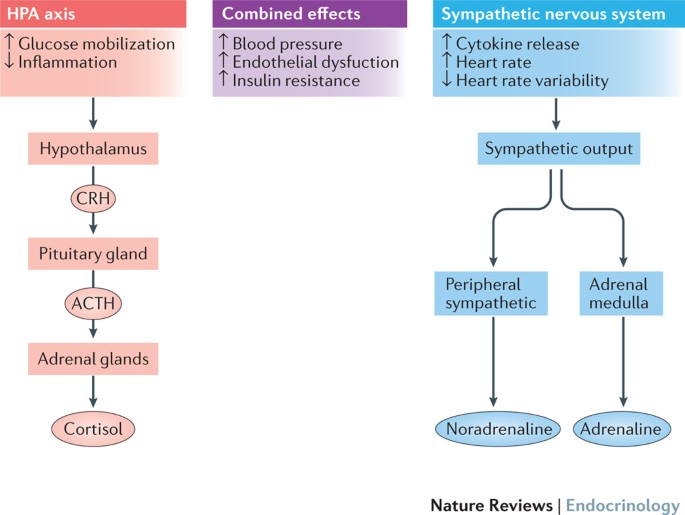 Type 2 diabetes mellitus and psychological stress - a..