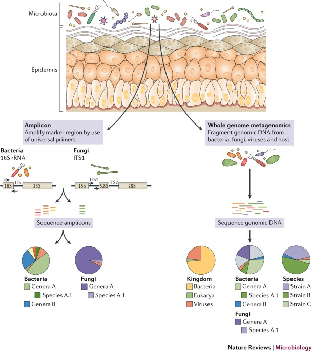 The human skin microbiome | Nature Reviews Microbiology