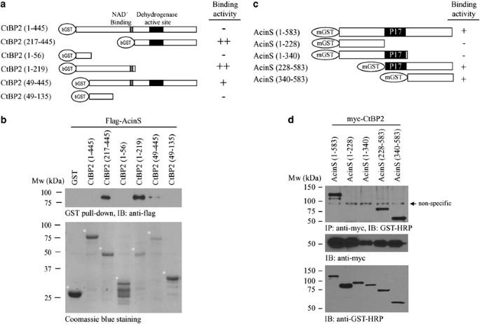 NGF inhibits human leukemia proliferation by