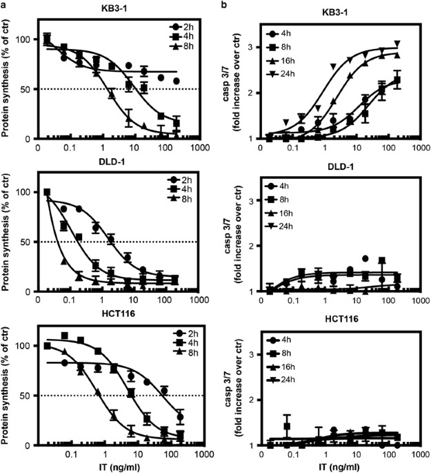 A, pharmacokinetics of EHD2 fusion proteins in mice