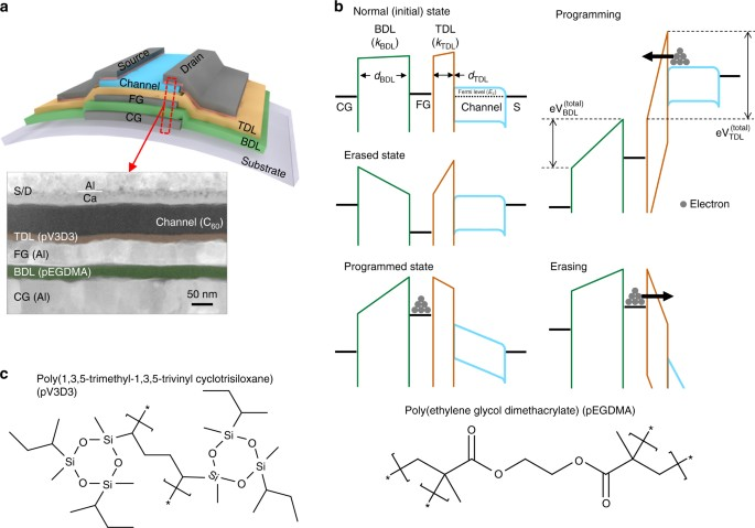 Organic Flash Memory On Various Flexible Substrates For